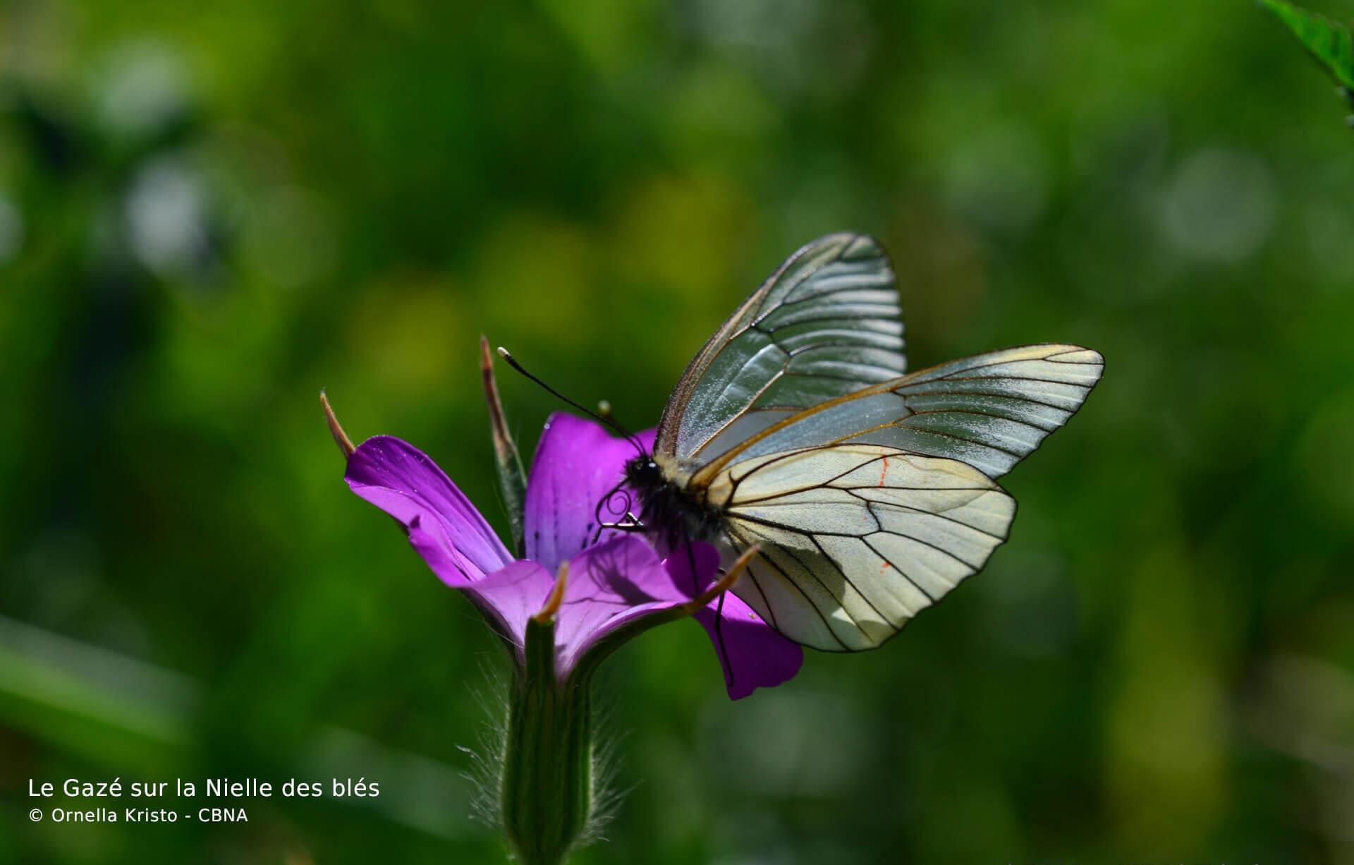 Biodiv'AURA Atlas
