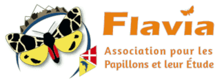 Logo Flavia APE